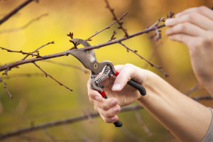 pruning-for-lent-new-image