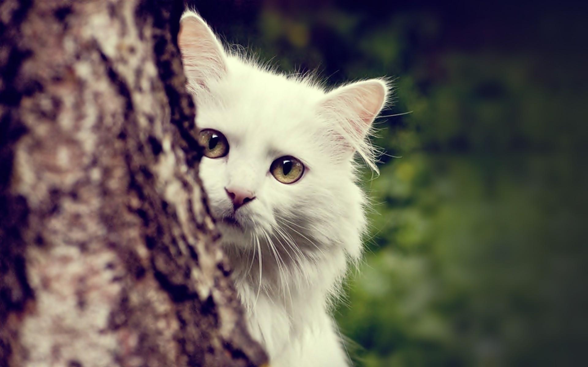 белая кошка рама загрузить